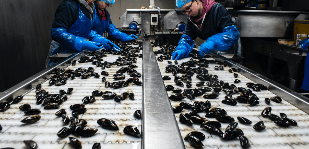 Food manufacturers mussels